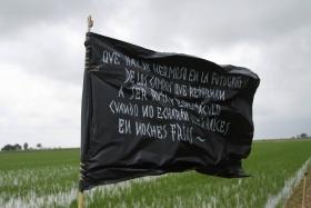 Imatge de bandera en mig de camps d'arròs del delta de l'Ebre.