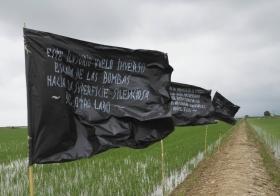 Imatge de bandeesa en mig de camps d'arròs del delta de l'Ebre.